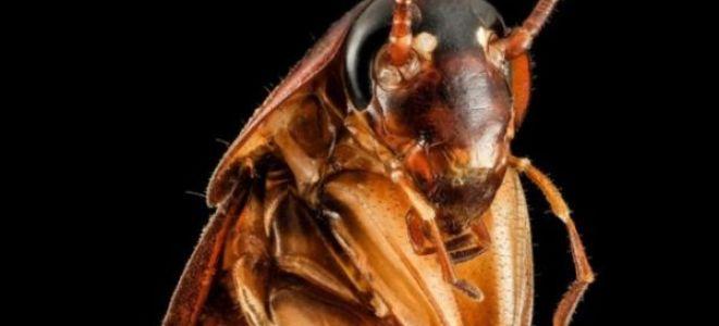 Сонник: к чему снятся тараканы