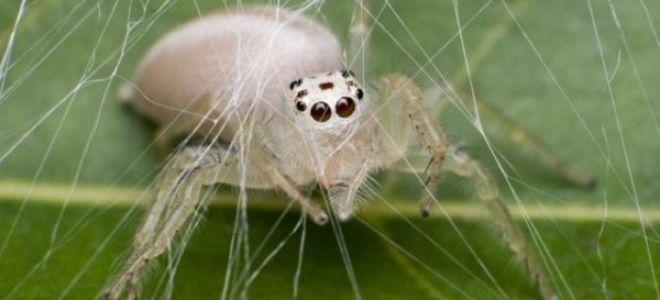 Сон попасть паук