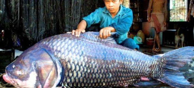 Сонник: к чему снится рыбалка (к болезни или радости)