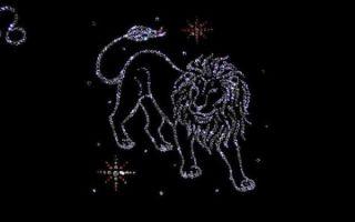 Совместимость львов в отношениях, любви, дружбе и бизнесе