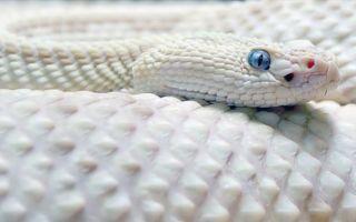 Что означает, если во сне укусила змея?