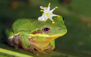 Толкование сна — к чему снятся лягушки по соннику