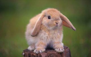 Кролики во сне женщины — значение сновидения
