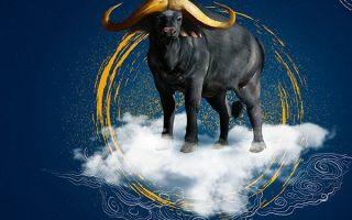 Совместимость быка икрысы — причины конфликтов