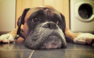 Мертвая собака во сне — к чему снится по соннику