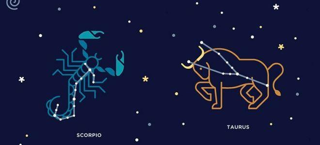 Совместимость телец-скорпион: дружба и партнерство, брачные отношения