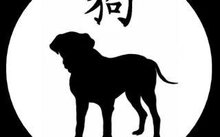 Описание совместимости в паре между собакой и кроликом