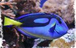 Толкование сонника — к чему снится рыба
