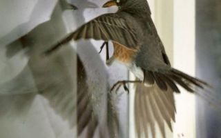 Значения примет про птиц, залетевших в окно