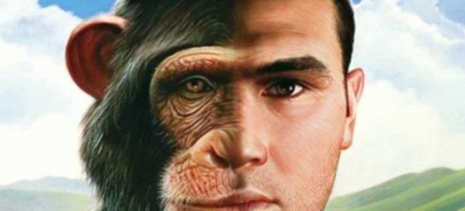 К чему во сне привиделась обезьяна