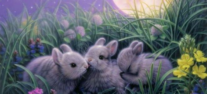 Как понять, к чему снится заяц