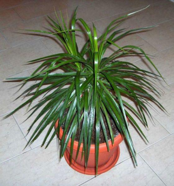 заговор на растение