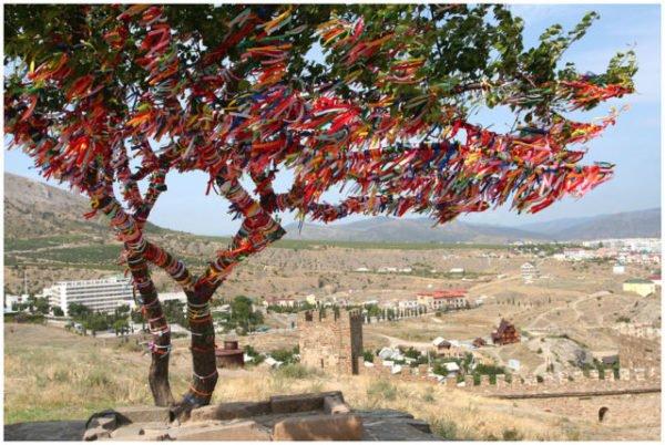 дерево желаний в палестине