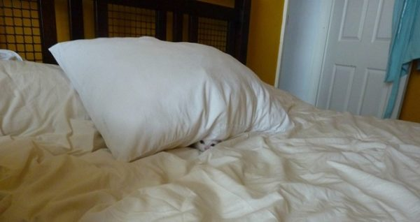 котик под подушкой