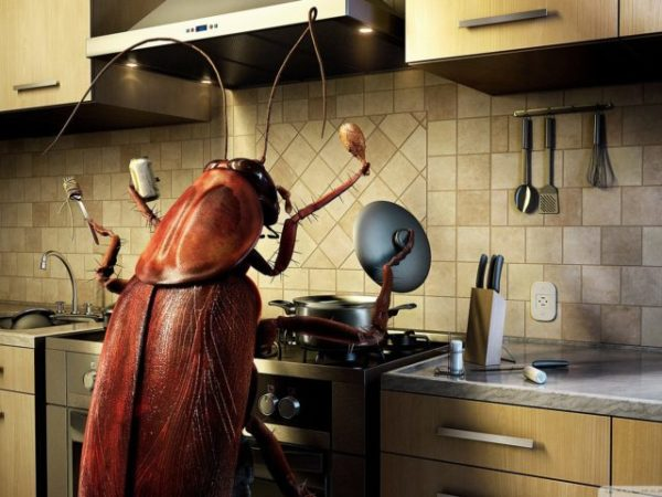 Сонник тараканы и жуки много
