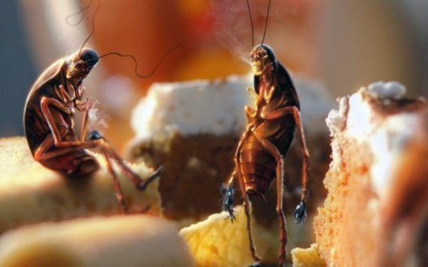 Тараканы сонник
