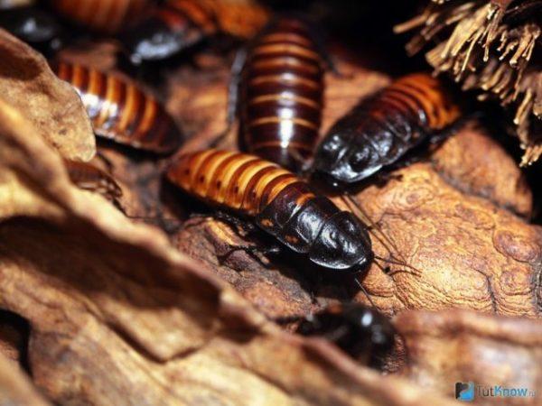 Морить тараканов сонник