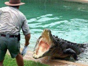 Приснилось, что крокодил нападает
