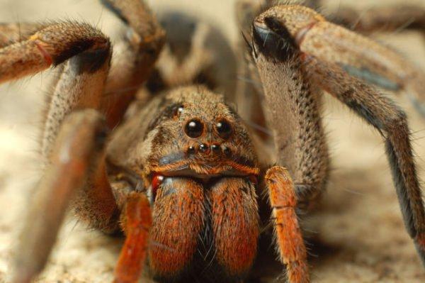 Сонник увидеть во сне паука