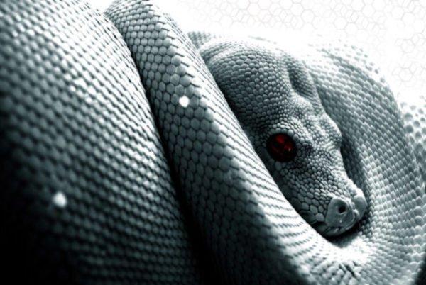 Сонник толкование снов змея укусила