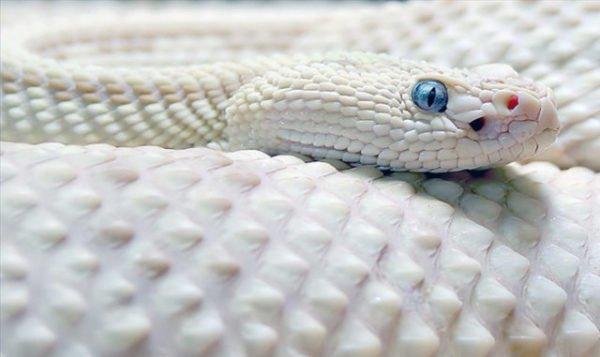 Исламский сонник укусила змея в ногу