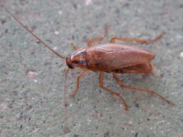 Видеть во сне таракана большого