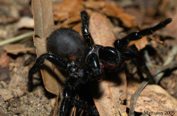 Why dream of a big spider: the correct interpretation of the dream