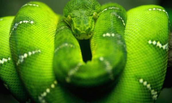 Сонник толкование укусила змея за ногу