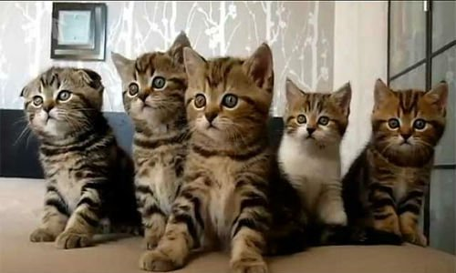 снится много котят