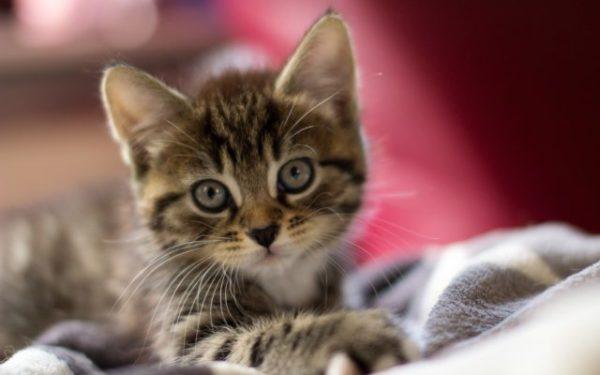 Сонник котята маленькие много новорожденные