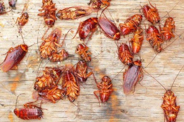 В то же время предстоят и хлопоты: при этом, большие черные тараканы снятся с предостережением, что ухудшение данных отношений произойдет резко и бесповоротно.