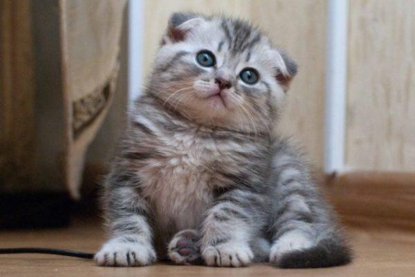 Сонник белый котенок маленький на руках