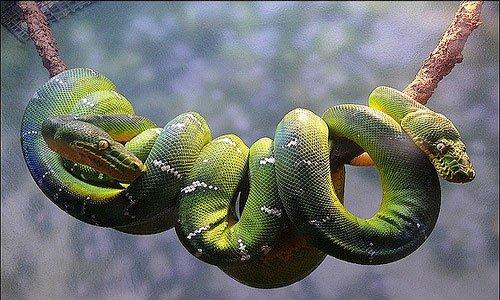 Мусульманский сонник змея укусила