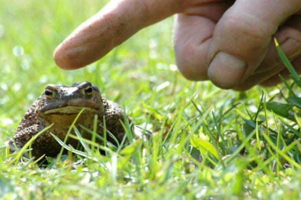 снится трогать лягушку рукой