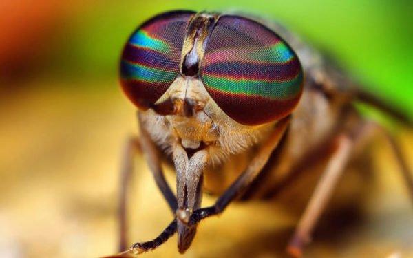 жужащая муха во сне