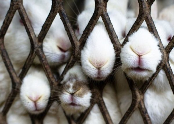 зайцы в клетке