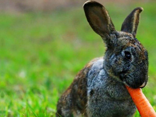 кормит зайца