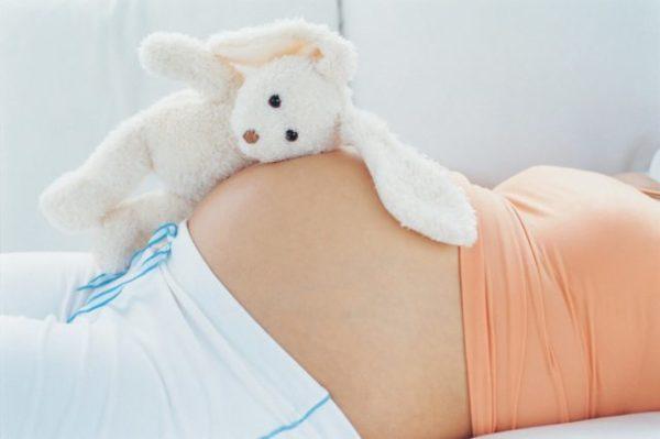 заяц и беременная