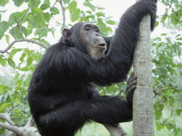 сон про обезьяну на дереве