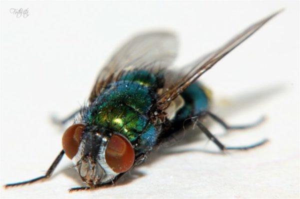 убить муху во сне
