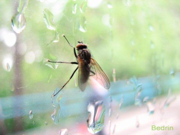 приснилась муха на окне
