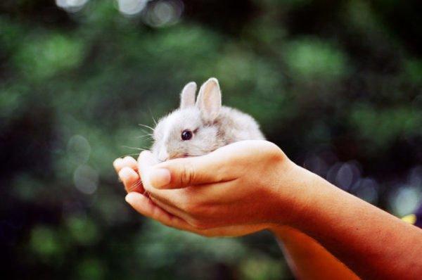 маленький зайчик