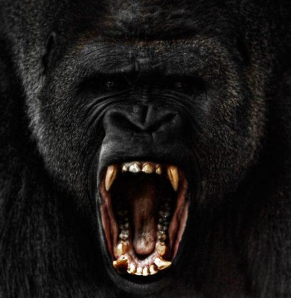 снится агрессивная горилла