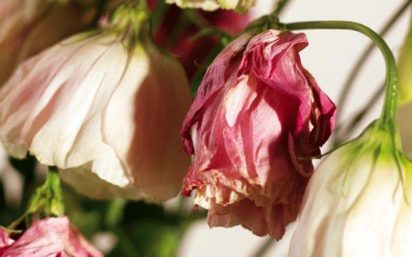 некрасивые цветы
