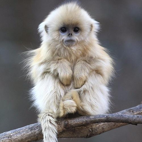 приснилась маленькая обезьянка