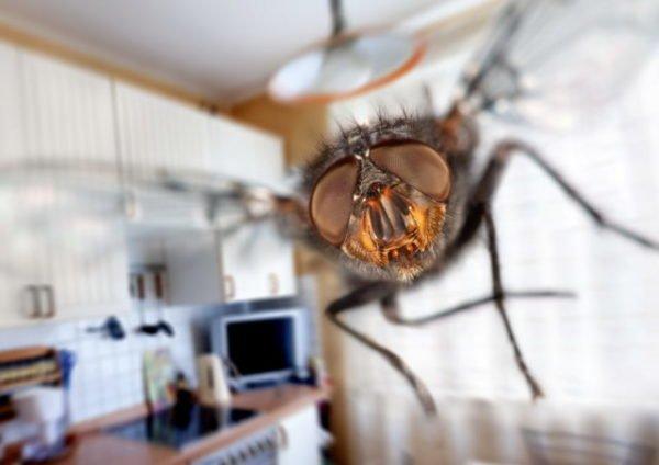 мухи в маленьком помещении