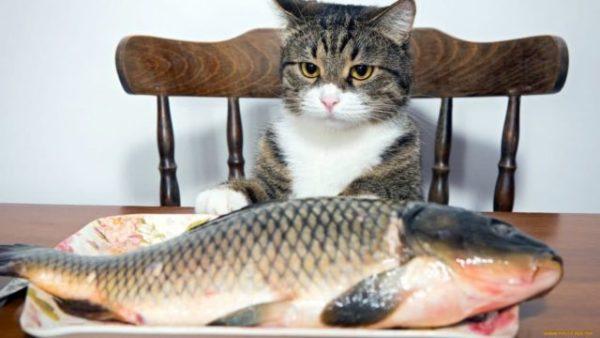 кормить кошку рыбой