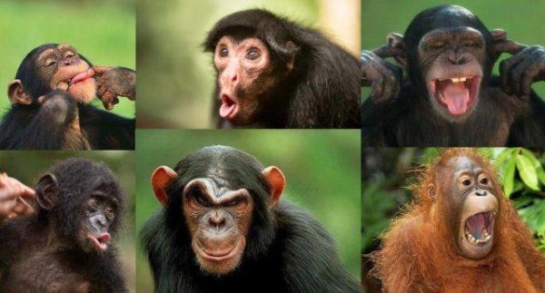 разные виды обезьян