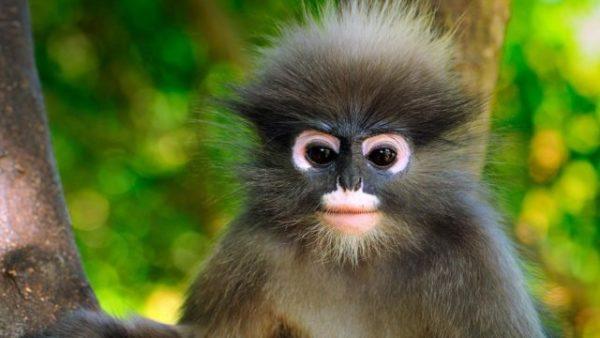 снится обезьяна сонник