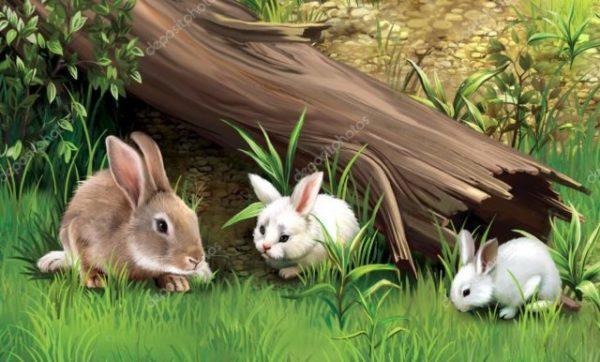 заяц и зайчата